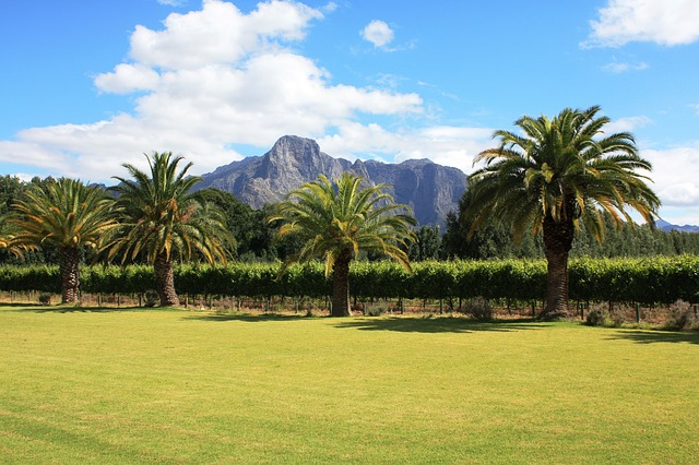 South Africa winery