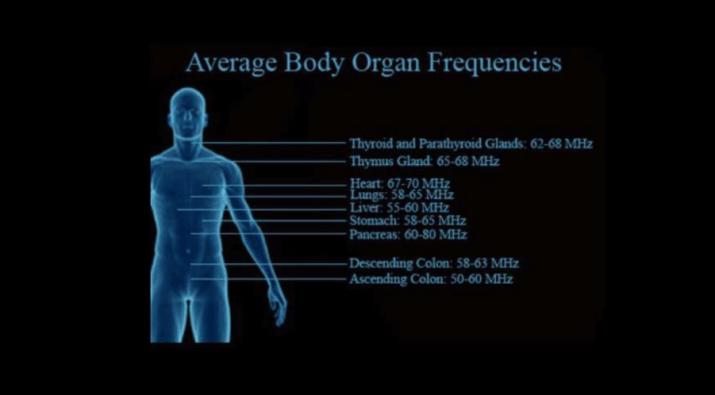 Human Body Organ Frequencies