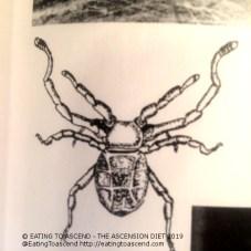 MayanSpiderNAZCAbook3