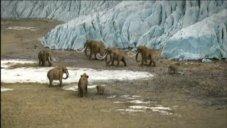 ANTARCTICA PHOTO MAMMOTHS AT ICE CAPONLAND