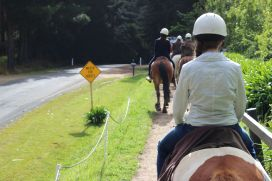 Horseback-winery-tour-mornington-peninsula-17