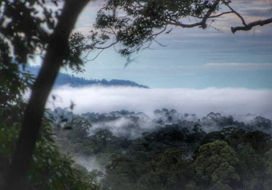 The view over the rainforest canopy from the foot of the scary scaffolding