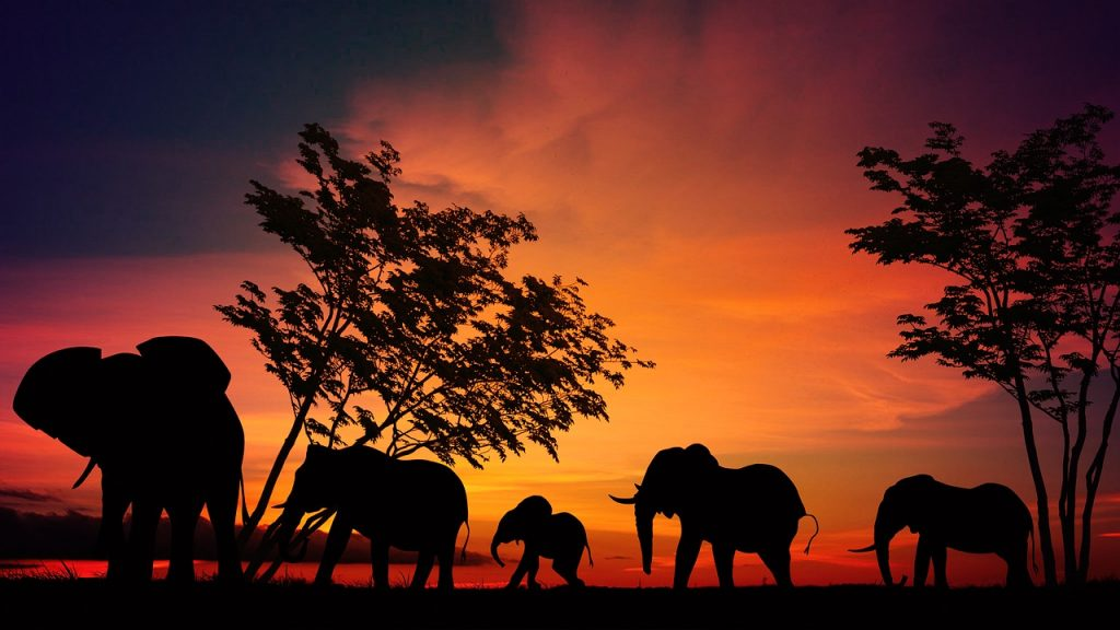 Follow Me On A Virtual Safari Through Africa To Help Save The Elephants