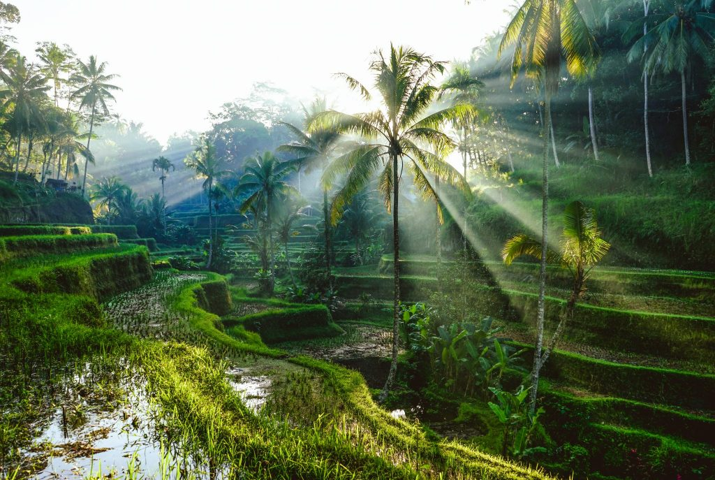 Bali Facts: Things To Know About This Indonesian Island