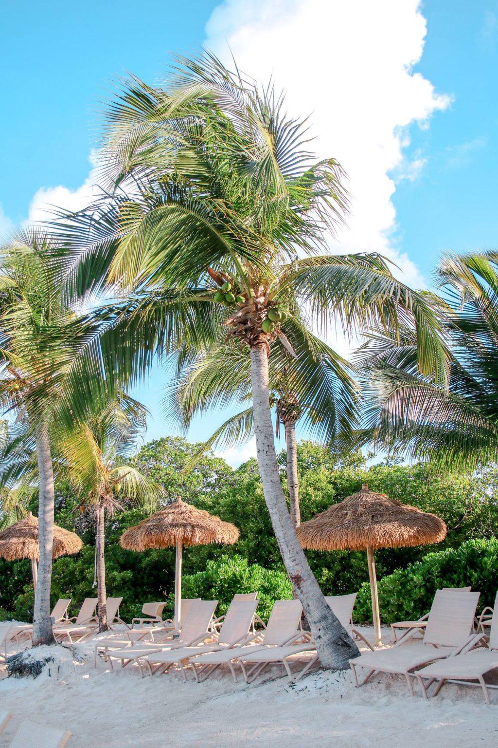 Beach chairs at flamingo beach in aruba