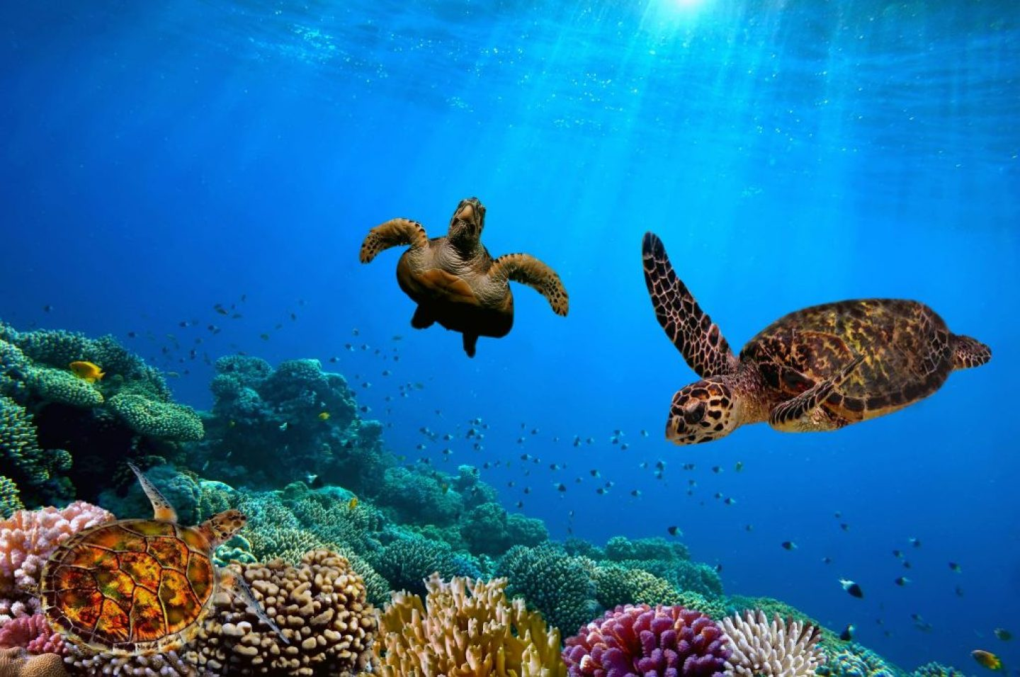 Barbados facts: word class scuba diving with sea turtles