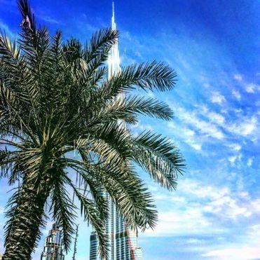 Take a bus tour of Dubai
