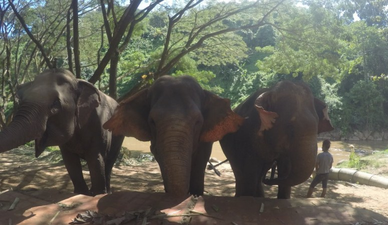 Excursion Review – Chiang Mai TUM Elephant Trekking Care