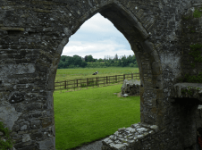Bective Abbey - no matter how lush is the grass in Ireland, the cows will still want what's on the other side of the fence!