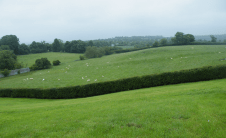Newgrange is spectacular, but I'm just as taken by what I can see from it as what I see while I'm looking at it.