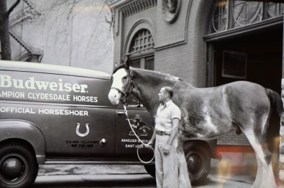 clydesdale-historic-photo
