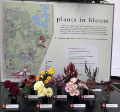plants-in-bloom