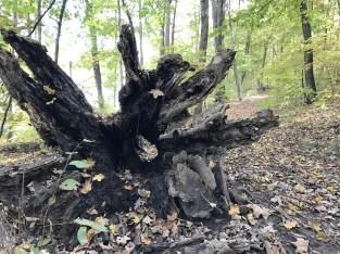 tree-hole