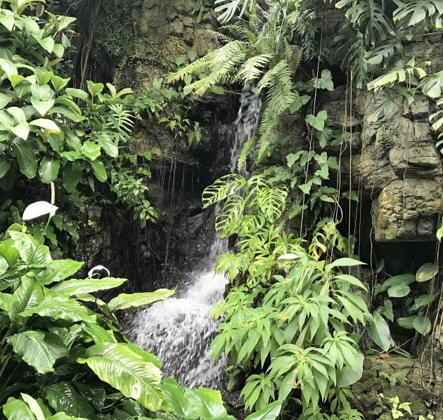 waterfall-leaves