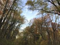 great-smoky-trees-3