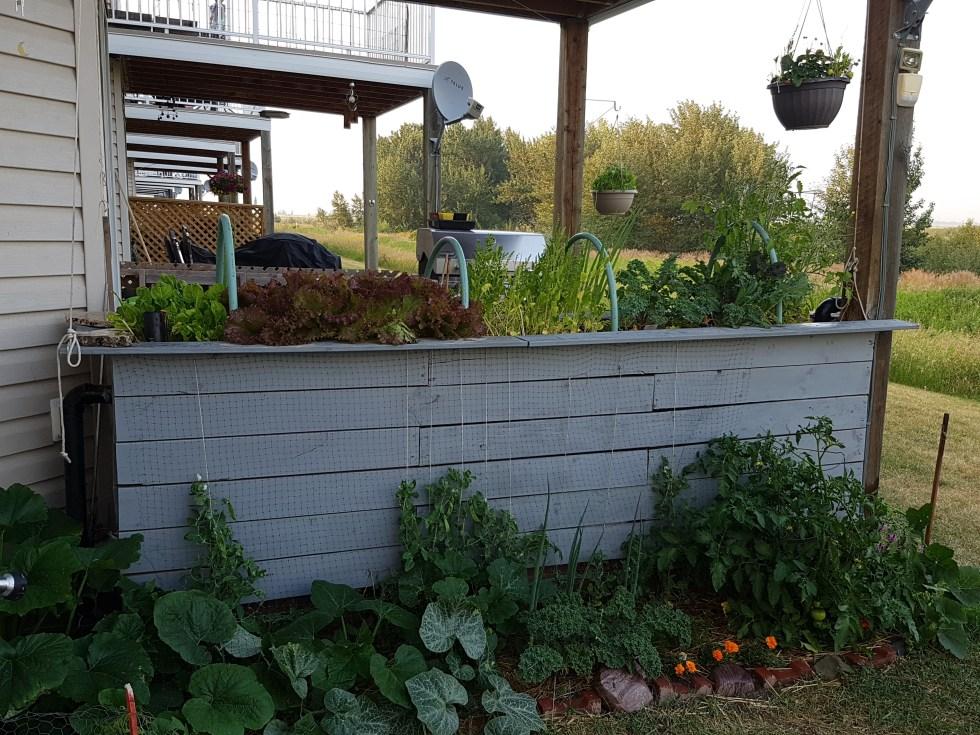 Townhouse deck self-watering garden
