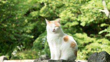 Chat à Kyoto