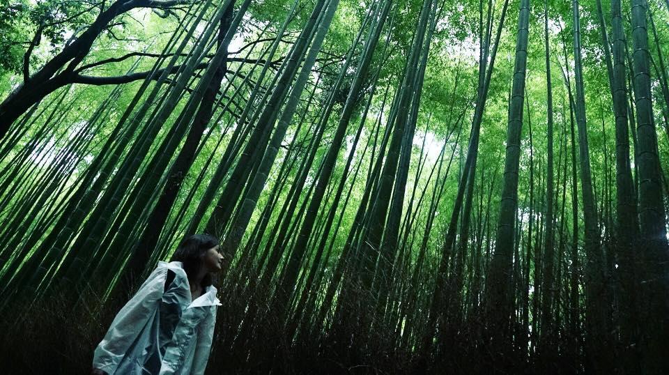 Arashiyama, la bambouseraie et le parc des singes