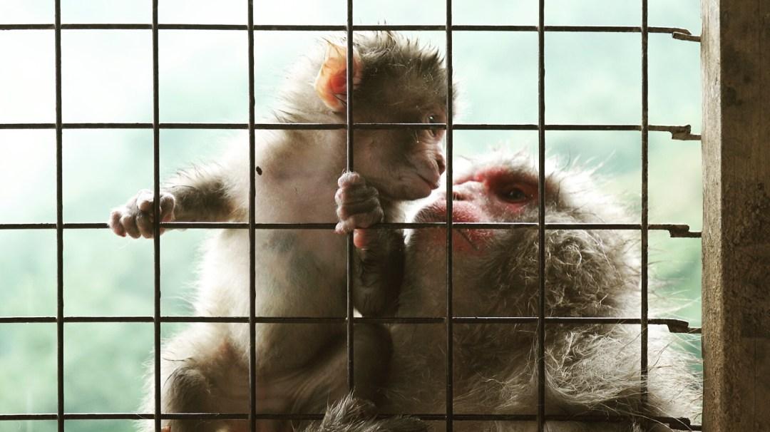 Une famille de singe