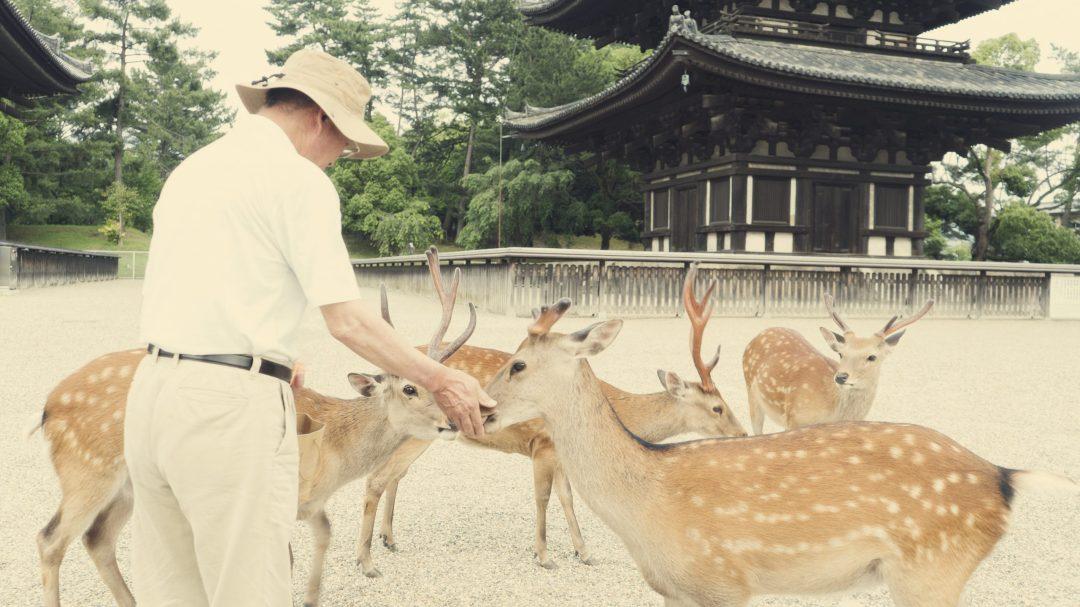 Un japonais nourrissant les daims à Nara