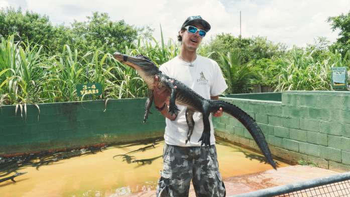 Un alligator de plus près