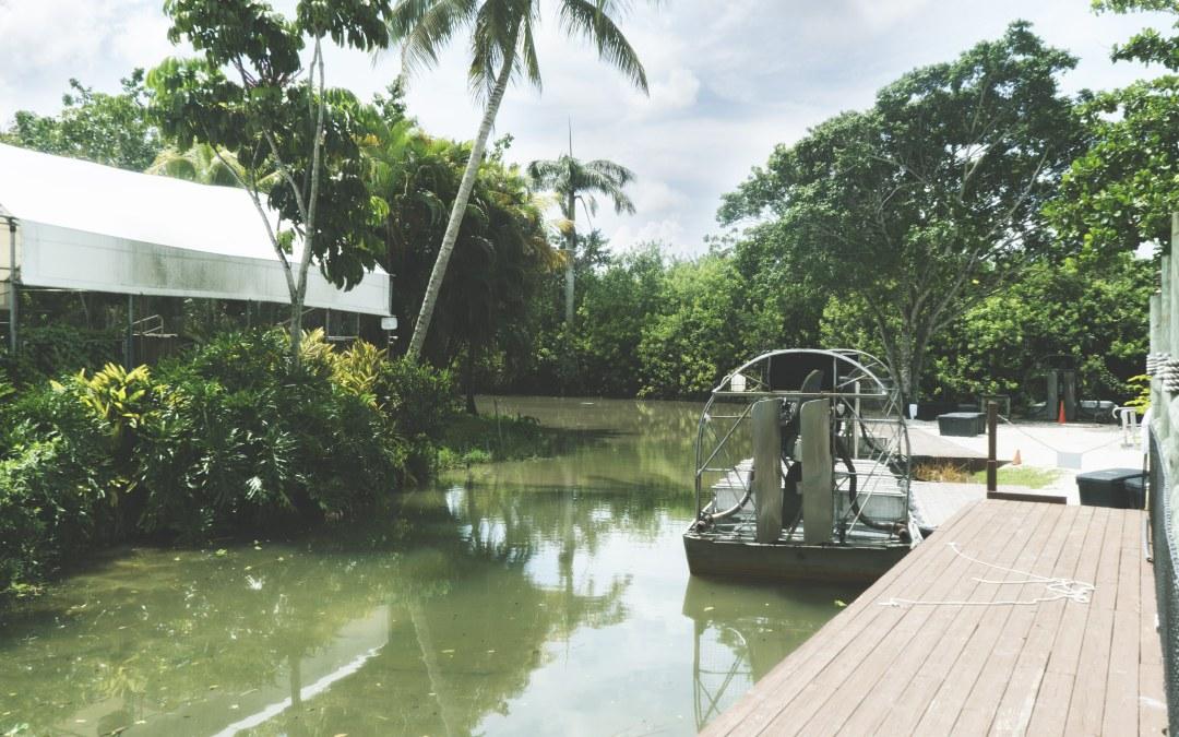 A la découverte des Everglades et Alligator Farm en Floride