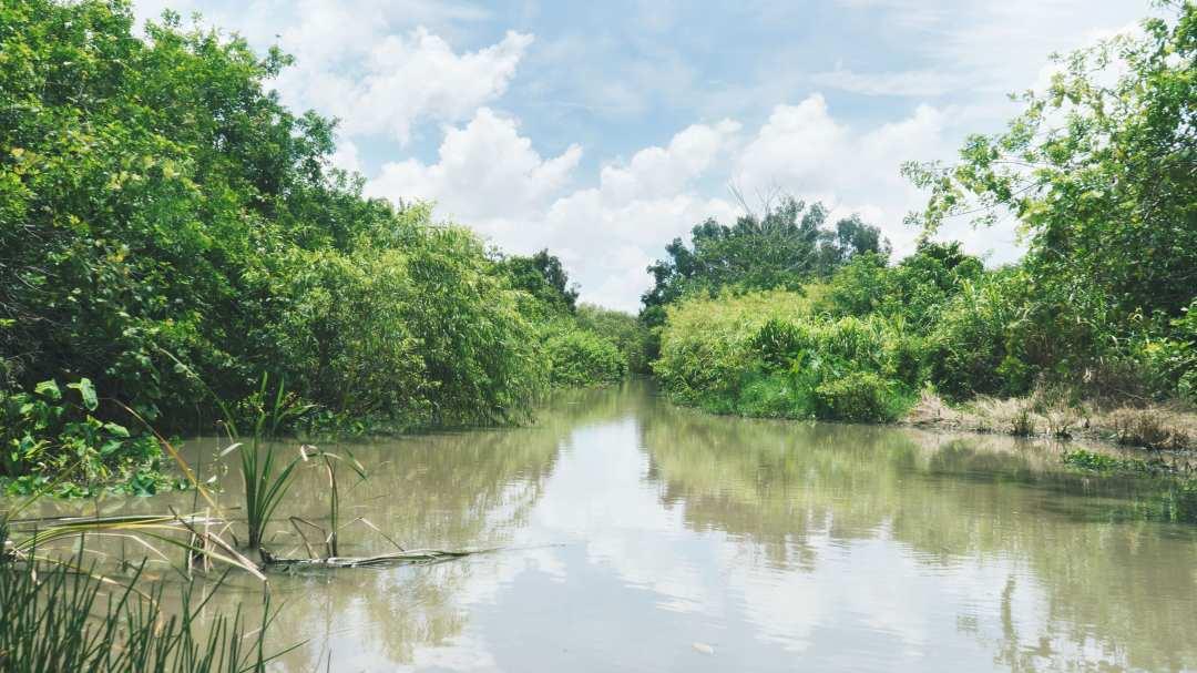 Les marécages des Everglades