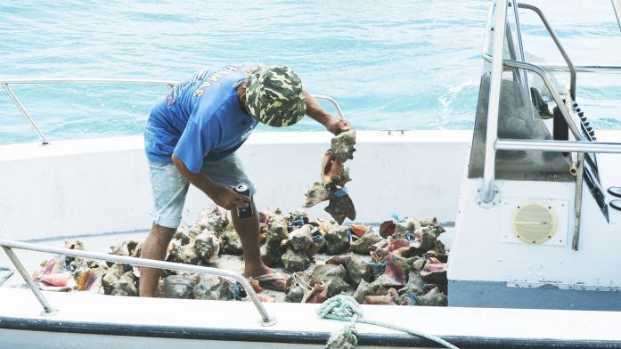 Le conch spécialité de l'île