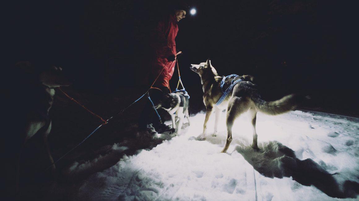 Les chiens dans la nuit