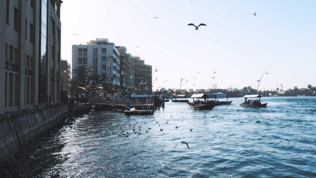 les oiseaux volant dans la crique de Dubaï