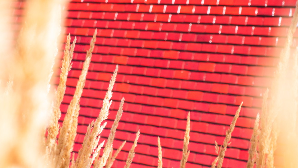 des épis de blés sur fond de briques rouges