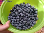 Blueberry U-Pick @ Birak Farm