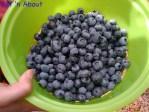 Blueberry U-Pick @ Birak Farm