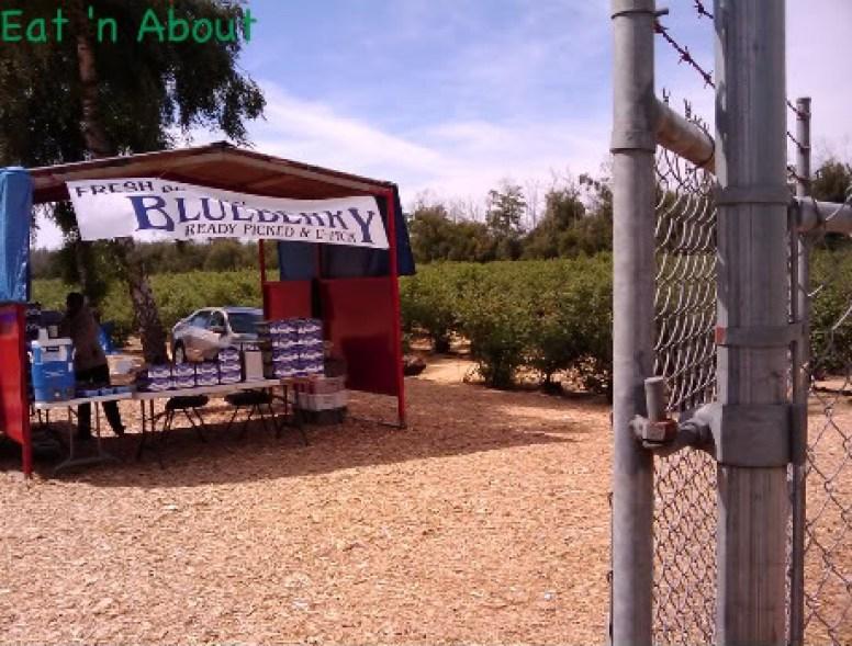 Blueberry U-Pick at Birak Farm