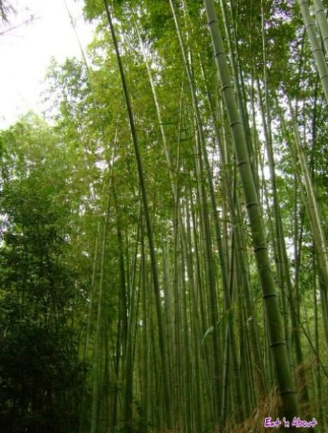Arashiyama natural bamboo forest