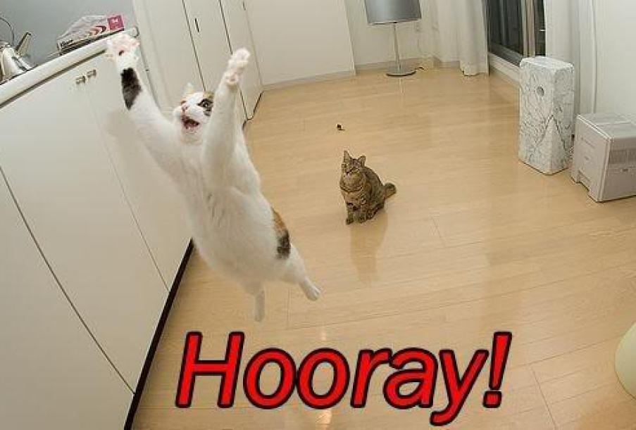 Cat's jumping with Hooray! caption