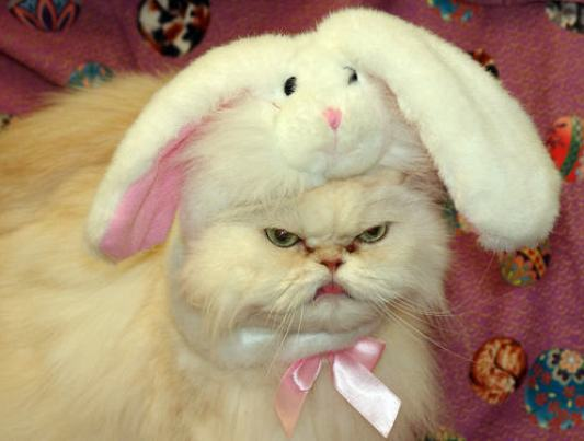 Easter Bunny Kitten Cat