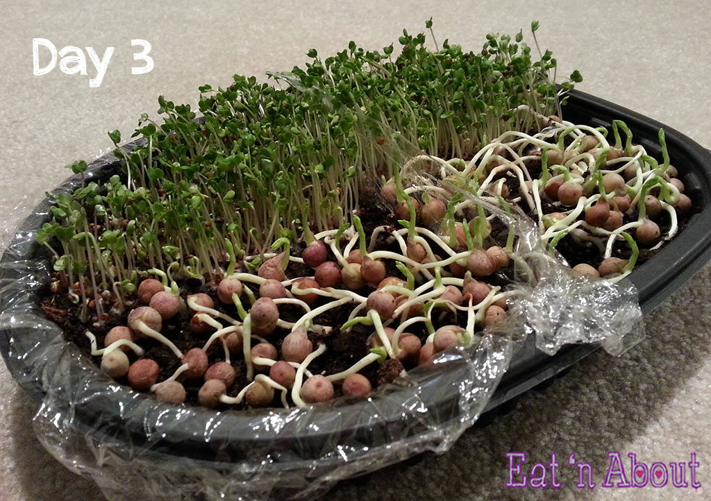 Seed sprouting day 3