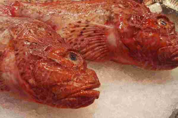 cabracho fish northern spain
