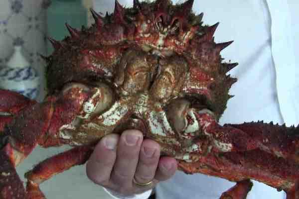 galician crab centollo