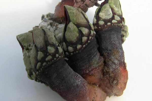 percebes galician seafood delicacy