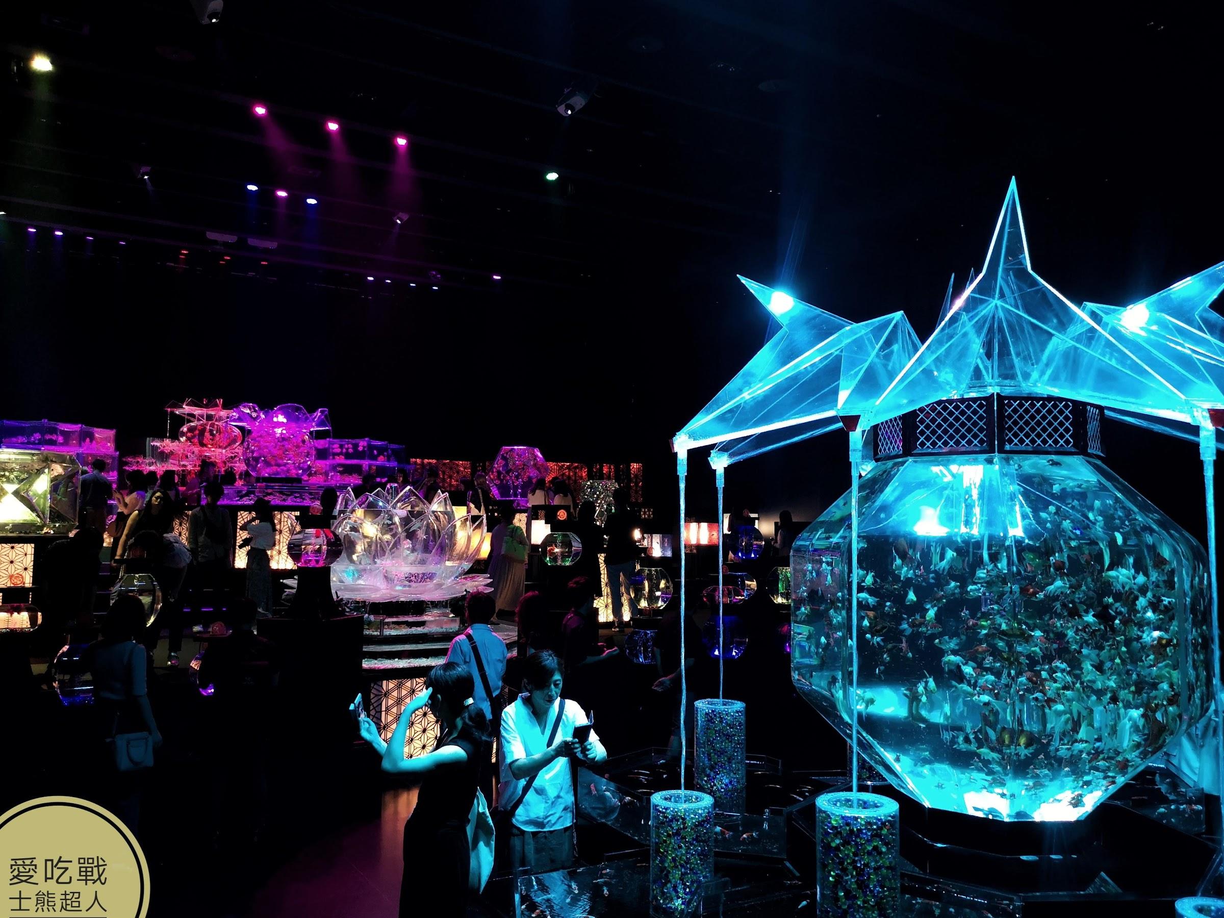 。東京 日本橋。東京超壯觀金魚展+燈光秀:水族藝術誕生10週年記念祭-江戶、金魚夏夜涼意展