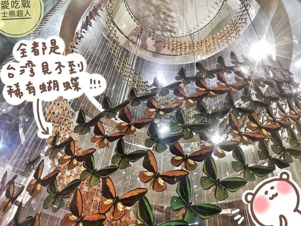 。嘉義 東區。新嘉大昆蟲館:全球唯一的蝴蝶塔+體驗甲蟲的生態解說,好拍有趣的親子景點懶人包。