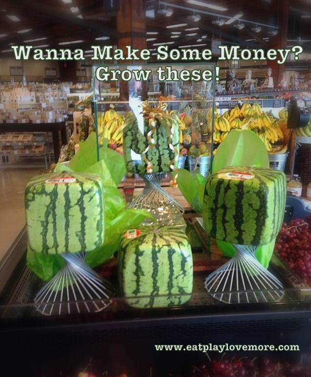 Wanna Make Some Money Grow Square Watermelons Eat