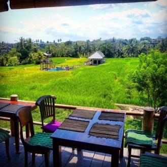 The view from Sari Organik