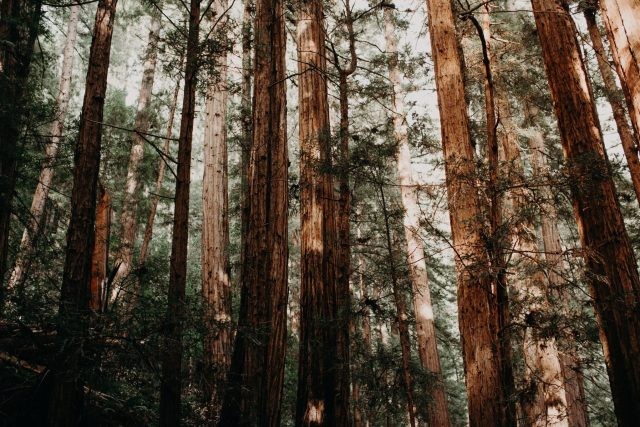 Muir Woods National Monument, California, USA
