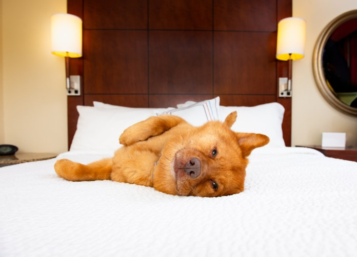 Dog in Hotel - Travel with your pet