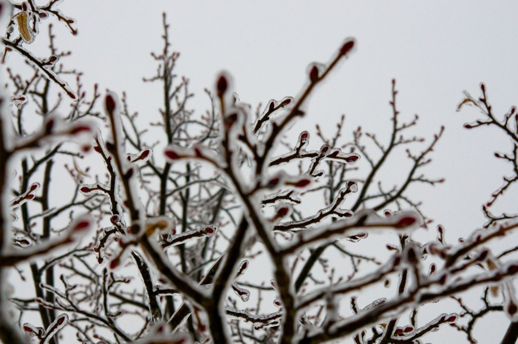 Frozen Branches Two