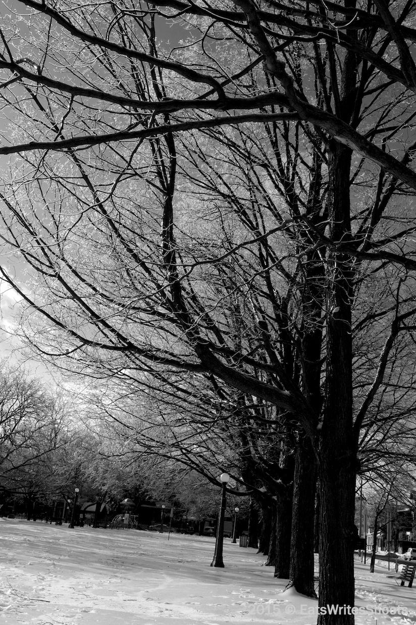 Frozen Trees (BW) 3