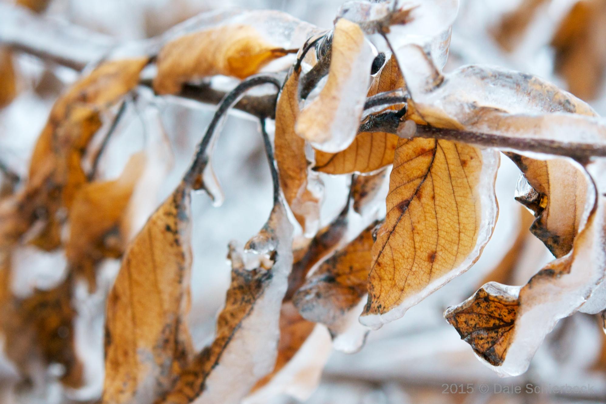 frozen leaves2